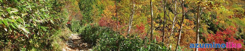 2015/9/28【柏原新道の紅葉】扇沢から爺ヶ岳に向かう登山道の柏原新道は紅葉の真っ盛りでした。