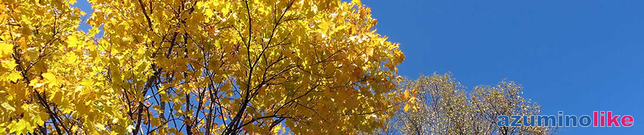 2016/10/20【八千穂高原の白樺林】佐久市のメルヘン街道の玄関口にあるのが八千穂高原で、白樺が群生した林は日本一の50万本を誇るのだそうです。