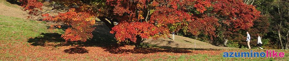 2016/11/3【大峰高原の七色カエデ】池田町の大峰高原の紅葉は「七色大カエデ」で有名です。紅葉のピークは過ぎたようですが、まだまだ見ごたえがありました。