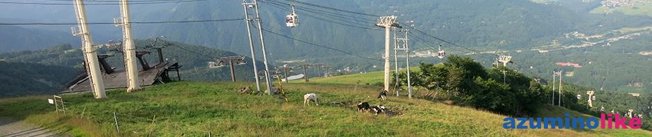 2016/8/5【白馬村・八方尾根の夏】八方尾根・兎平の山の上では、牛達ものんびりとくつろいでいました。