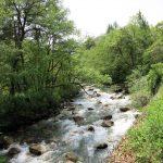 ⑥ 園内に流れる川