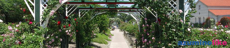 2014/5/30【豊科美術館のバラ】安曇野のバラの名所で、無料で観れて目の保養にもなります。
