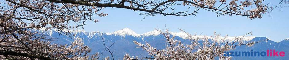 2016/4/15【桜満開の光城山】麓は散った桜が頂上付近では満開、桜の枝でサンドされた北アルプスです。