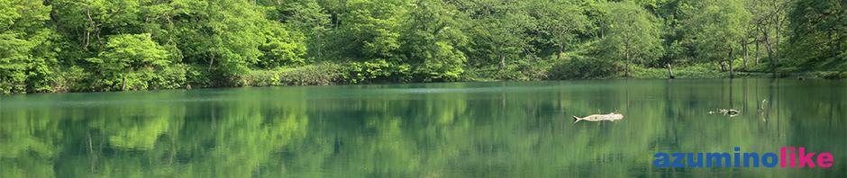 2016/5/15【巨大魚伝説の「高浪の池」】糸魚川市にある「高浪の池」は山中の神秘的な池で、4m台の巨大魚がいたと言う伝説があります。