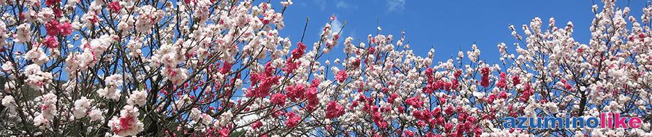 2016/4/23【花桃の里、阿智村】南信の恵那山の麓にある阿智村は花桃が有名で、山里一面にピンクと白の花が咲き誇っていました。