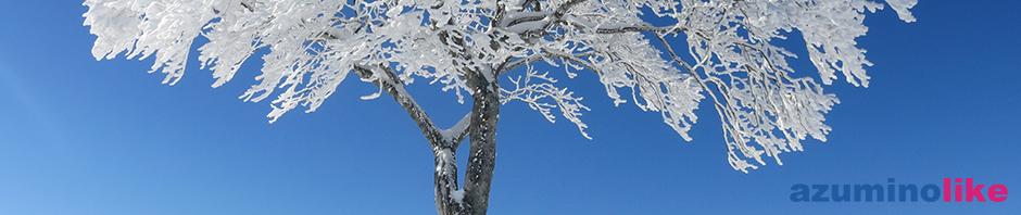 2016/2/18【野沢温泉スキー場の木立】快晴の紺碧の空と雪の木立が眩いばかりです。
