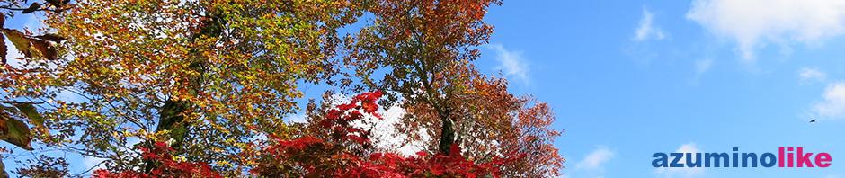 2017/10/17【雨飾山の紅葉】仰ぎ見た青い空に赤と黄色のグラデーションが見事です。心地よい風に散りゆく葉を眺めながら、過ぎゆく季節を感じました。