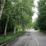 ②原村、白樺の道
