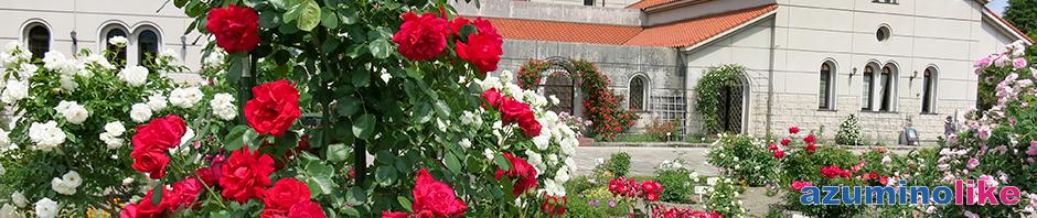 2019/6/5【安曇野市豊科美術館・バラ園】バラ祭り(5/25-6/2)も終わって少しピークを過ぎた感じがしましたが、まだまだ見応えのあるバラでした。