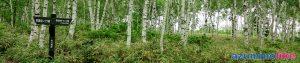 2019/7/4【佐久穂町の白樺原生林】八千穂高原は北八ヶ岳の東麓に広がる自然豊かな高原で、約50万本の白樺林が植生してその群生は日本一にふさわしい優美さです。