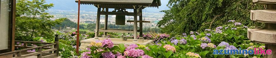 2019/7/15【法船寺のアジサイ】松本市の法船寺はアジサイ寺として有名ですが、小高い丘からは市街地や遠くの山々の眺望も秀麗でした。
