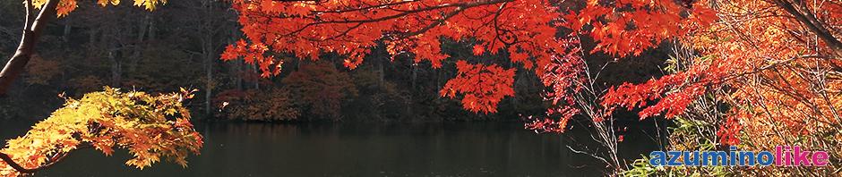 2019/10/30【小谷村・鎌池の紅葉】日本百名山・雨飾山の登山口近くにある鎌池、真紅と黄金の紅葉はまさに圧巻でした。