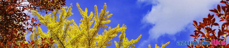 2019/11/11【大町市・霊松寺の紅葉】オハツキイチョウの紅葉で有名な霊松寺、色鮮やかな紅葉が青空に映えていました。