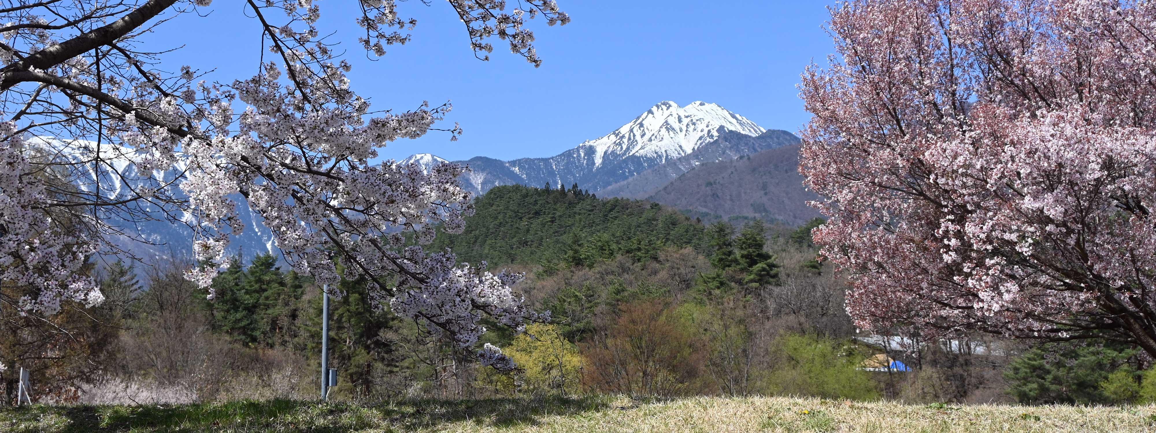 2021/12/17【常念岳と桜の花】