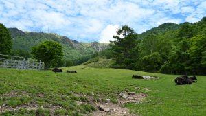 三城牧場から見る美ヶ原、王ケ頭